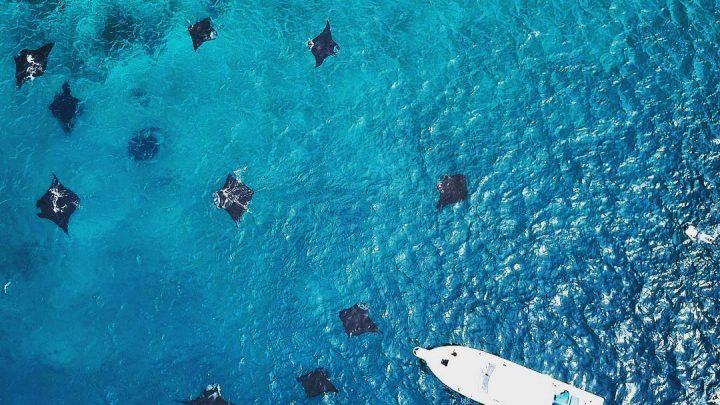 Sail Komodo Trip